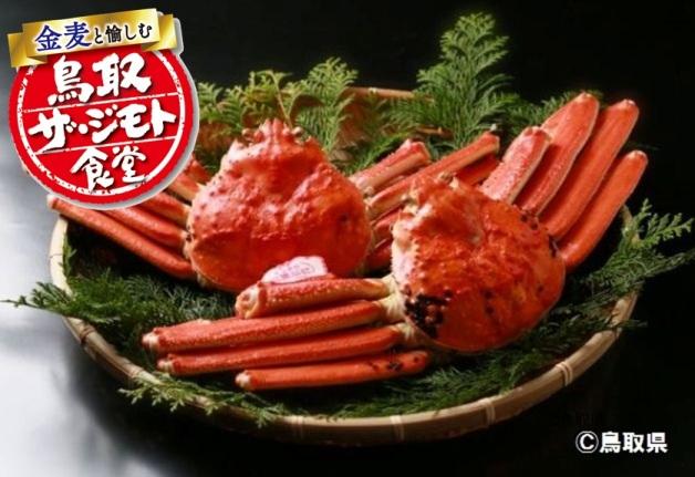 【烏取ザ・ジモト食堂】鳥取の冬の味覚「松葉ガニ」を堪能!「金麦」で乾杯しよう♪