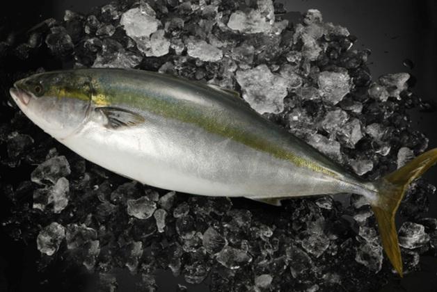 「金麦」と冬の味覚を堪能!島根県産ブリを使った絶品「ブリしゃぶ鍋」レシピをご紹介