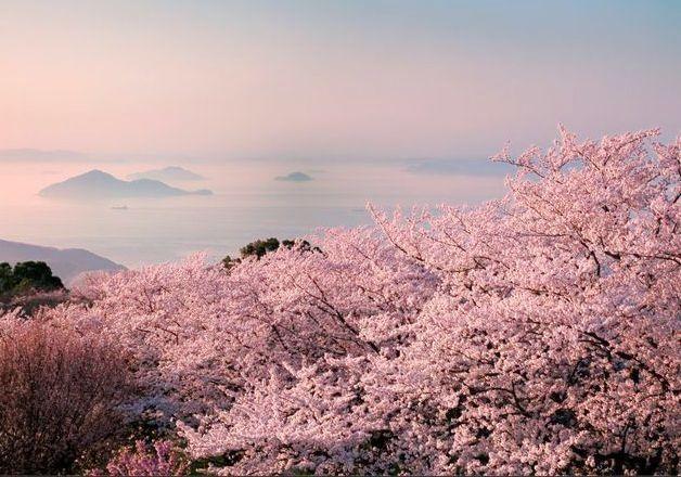 お花見にもやっぱり「金麦」!中四国エリアのおススメお花見スポットをご紹介♪