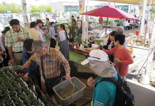 (終了しました)【サフィニア発売30周年】「ジョイフル本田 新田店」でサントリーフラワーズ特設コーナー設置!本気野菜トマトを試食しよう