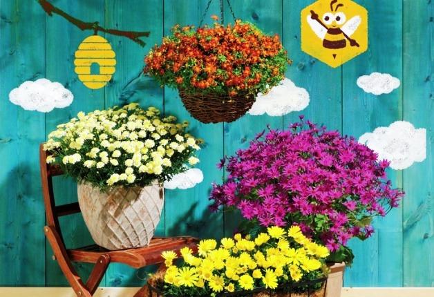 カインズでサントリーの花苗がお得!秋冬ガーデニングにおすすめの花もご紹介します♪