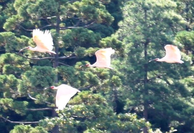 「サントリー世界愛鳥基金」は長崎と鹿児島の愛鳥活動団体を応援します!