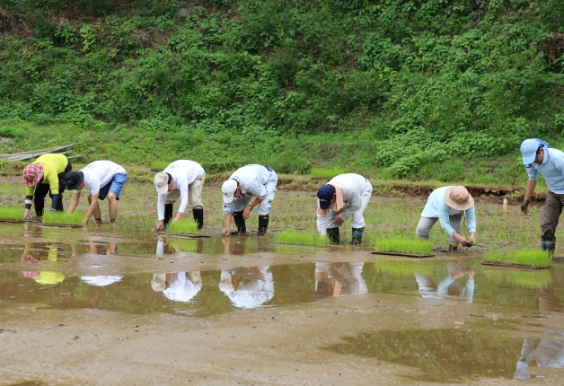 【サントリー水の国くまもと応援プロジェクト】復旧した「冬水田んぼ」で田植えを実施しました