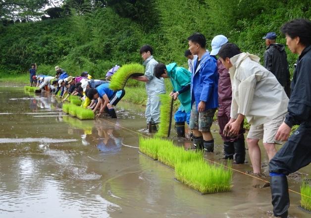 【サントリー水の国くまもと応援プロジェクト】今年も熊本県益城町で「冬水田んぼ」の田植えイベントを実施しました!