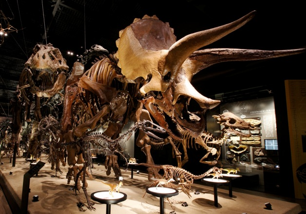 家族みんなで楽しもう!「御船町恐竜博物館」とサントリー九州熊本工場見学