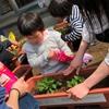 【サントリー水の国くまもと応援プロジェクト】仮設住宅の皆さんに花苗をお届け!サントリーフラワープロジェクト!