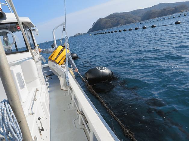 【取材レポート】岩手県大船渡市の復興支援先でカキ・ホヤ養殖施設が完成!