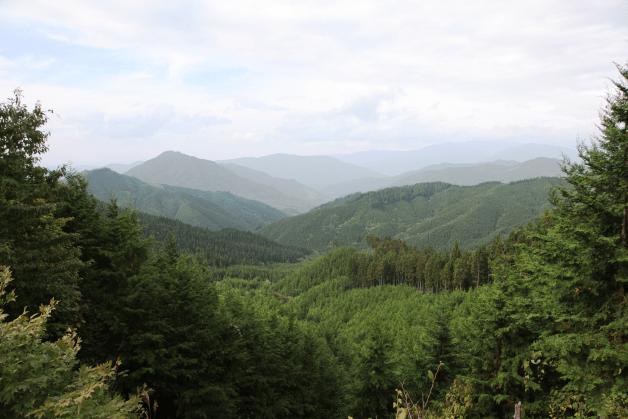 清らかな天然水はどうやって生まれる?サントリー「天然水の森 ぎふ東白川」での取り組みをご紹介します!