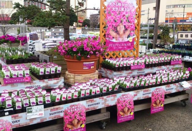 (終了しました)【4月21日~23日】「DCMカーマ21 浜松店」で「園芸まつり」開催!サントリーフラワーズブースも出展します♪