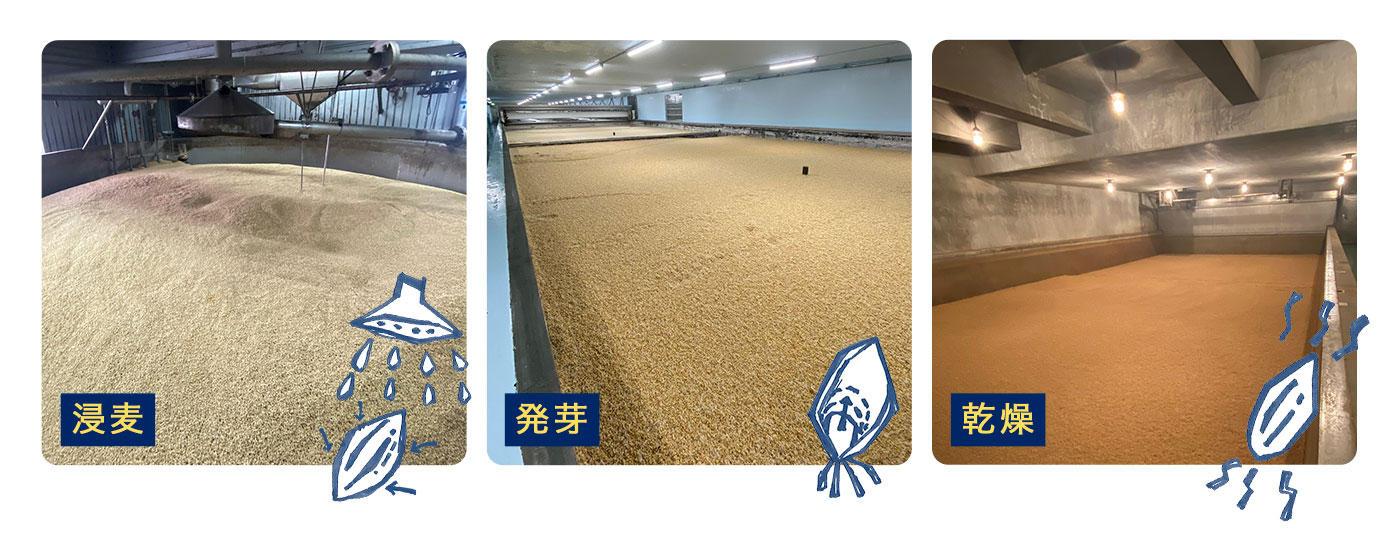 「金麦の色合いや味わいは麦芽づくりから」のイメージ