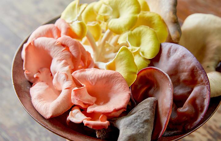 うまみと香りの宝庫! 旬のきのこと「秋の味の金麦」を とことん味わう