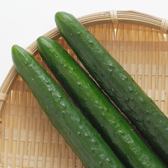 旬の食材・きゅうりの写真