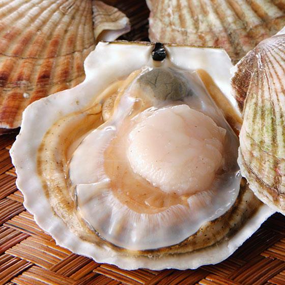旬の食材・ホタテの写真