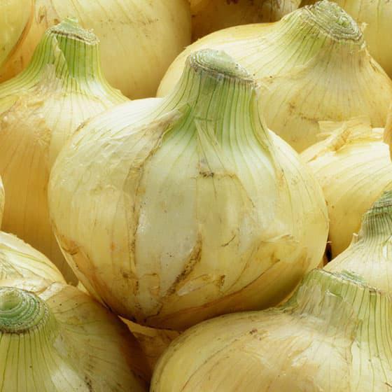 旬の食材・玉葱の写真