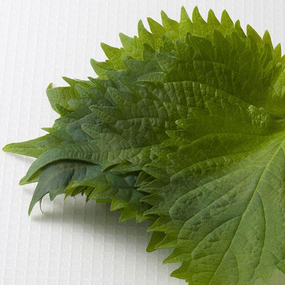 旬の食材・大葉の写真