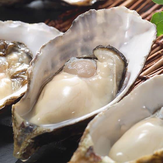 旬の食材・牡蠣の写真