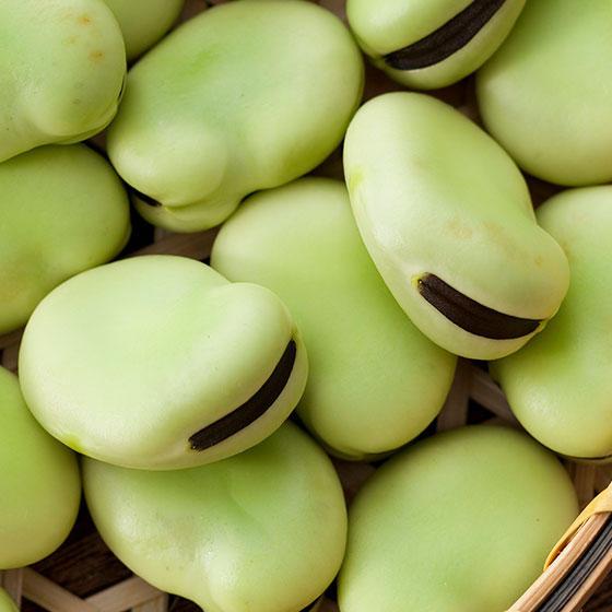 旬の食材・空豆の写真