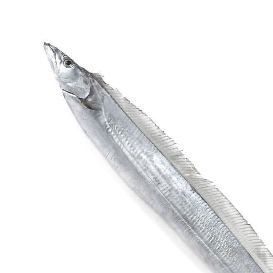 旬の食材・太刀魚の写真