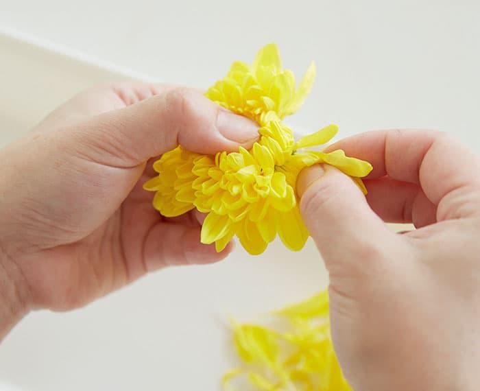 手順7 菊の花をほぐす