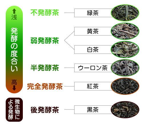 発酵度合いによる代表的なお茶の分類の図