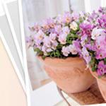 花とおしゃべりブログ