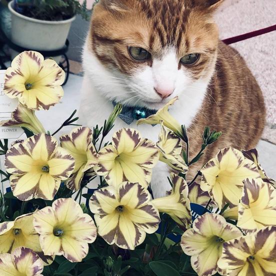 花なのにとらネコ?