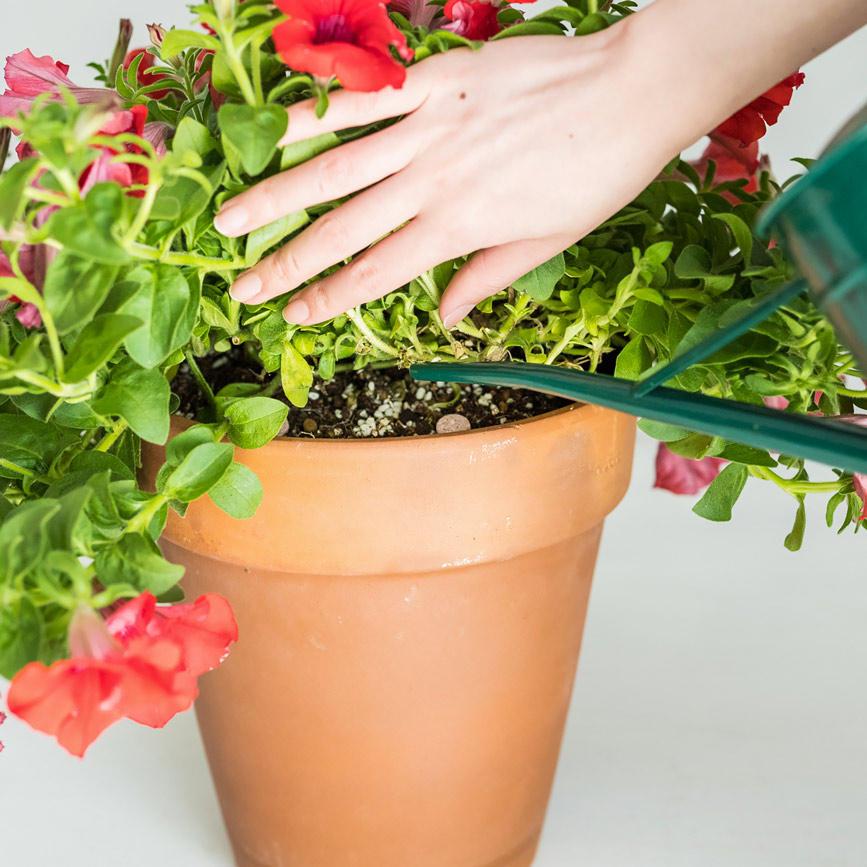 「肥料」を週に1回与えて成長力アップ!