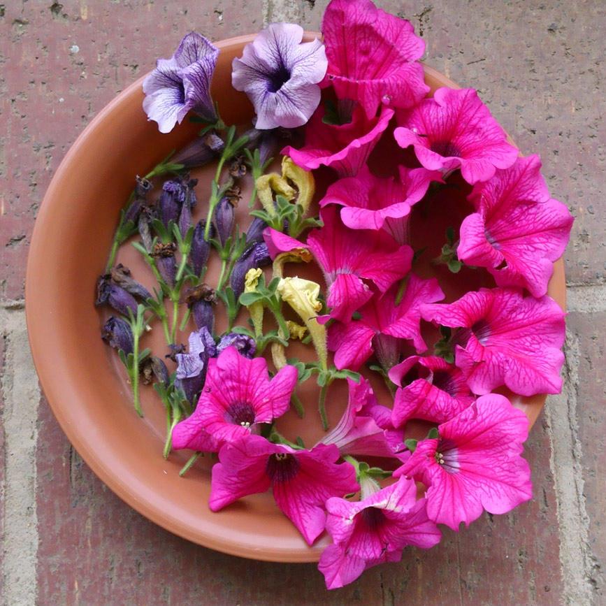 花が咲き終わったら「花がら摘み」!