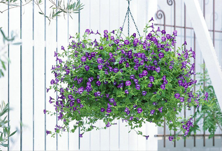 夏に強い花 サマーミスト