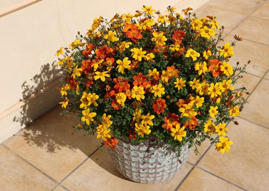 秋から楽しめて春は花いっぱい!すぐ楽ビーダンス