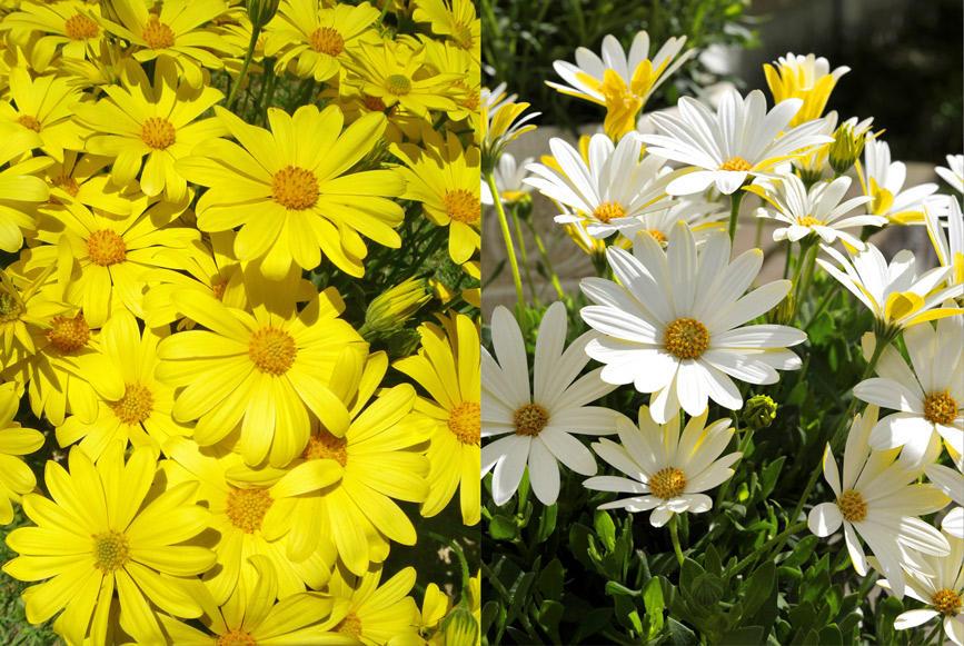 秋から楽しめて春は花いっぱい!キララ