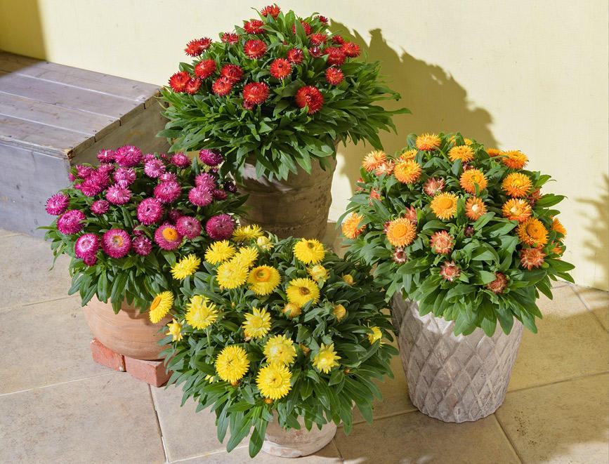 秋から楽しめて春は花いっぱい!コロロ