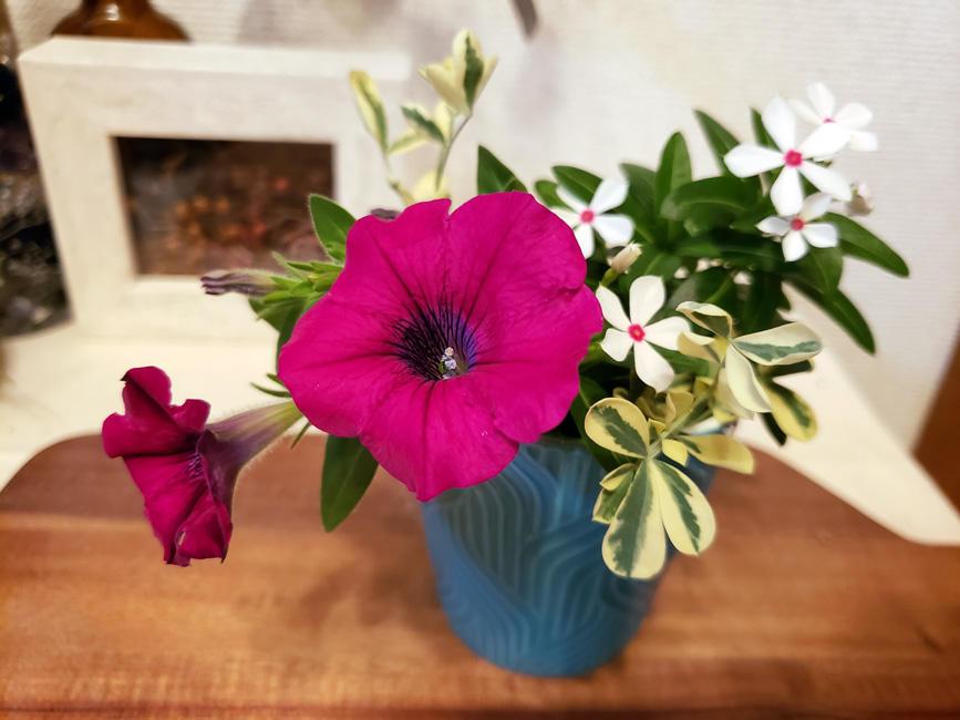 摘んだお花を、部屋に飾って♪