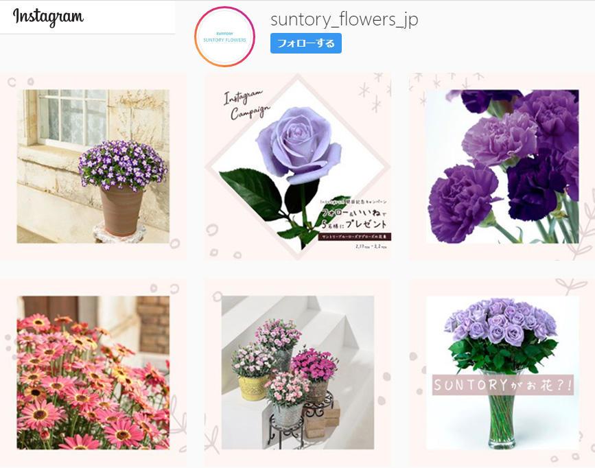 花の写真を楽しむ