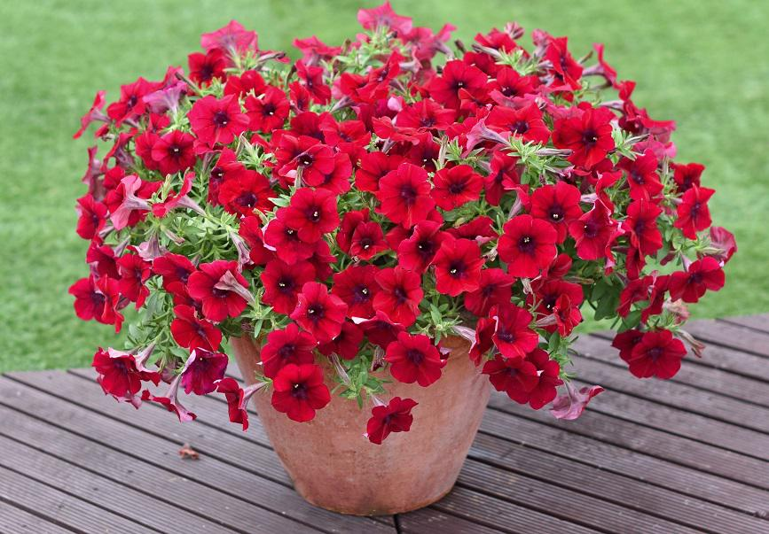 お花を育てて癒される暮らし
