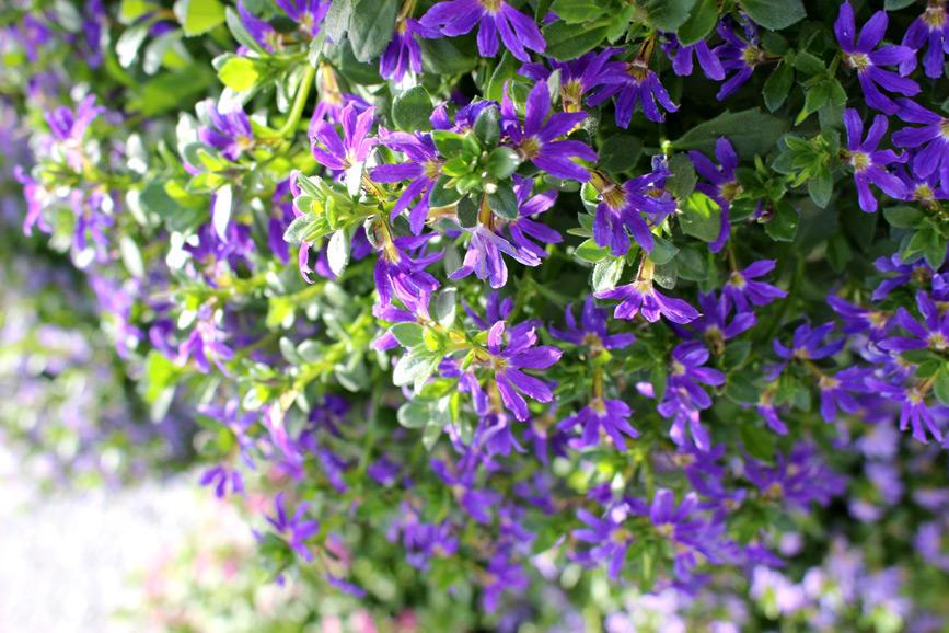 とにかく夏の暑さに強い花【5選】