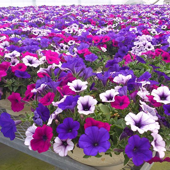 花いっぱいの春が来た!