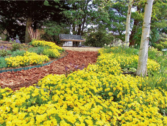 フィオリーナの花壇植え