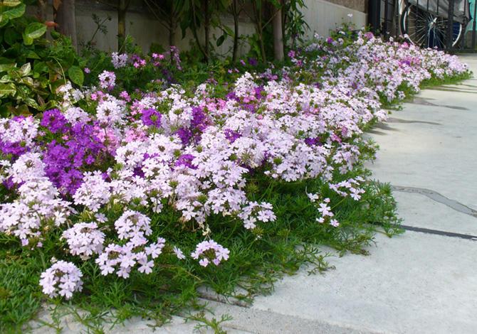 花の絨毯!タピアンのカーペット集