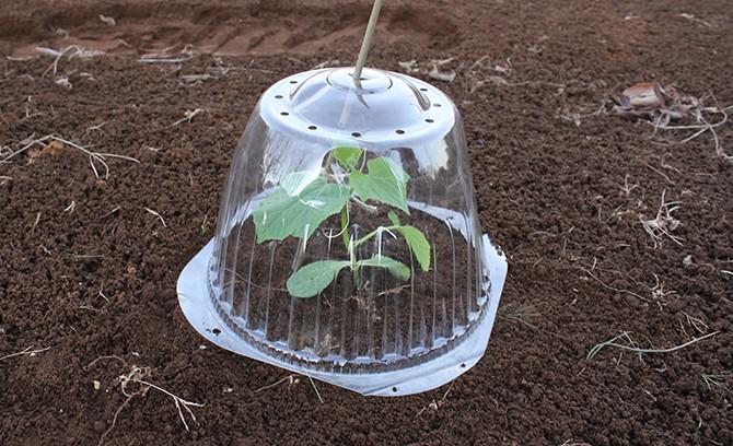 苗 の の 植え 方 きゅうり