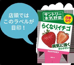 らくなりイチゴ