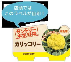 野菜苗 カリッコリーのラベル
