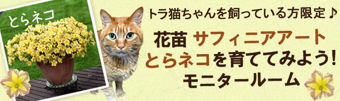 花苗「サフィニアアート とらネコ」を育ててみよう!モニタールーム