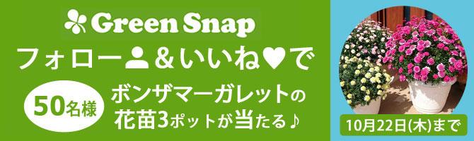 GreenSnapアカウント開設しました
