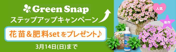 花苗&肥料セットを抽選でプレゼント♪GreenSnapステップアップキャンペーン!