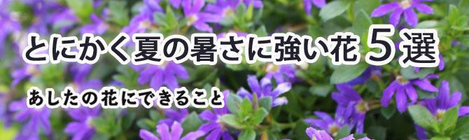 暑い季節も元気に咲いて育てやすい 夏の花特集。