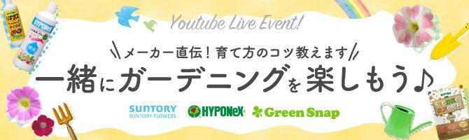 YouTubeライブイベント「メーカー直伝!育て方のコツ教えます!一緒にガーデニングを楽しもう」