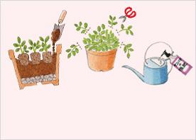 花の基本的な育て方