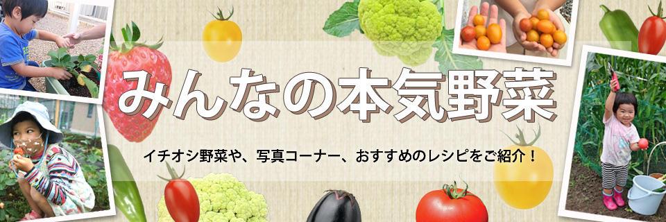 みんなの本気野菜