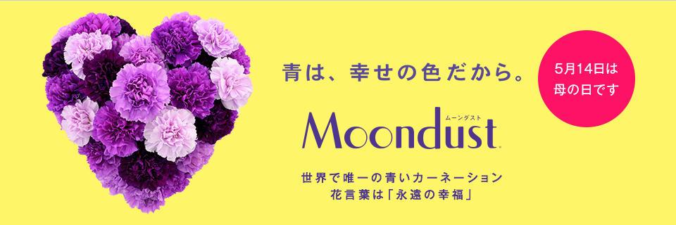 Moondust 5月14日は母の日です 世界で唯一の青いカーネーション 花言葉は「永遠の幸福」